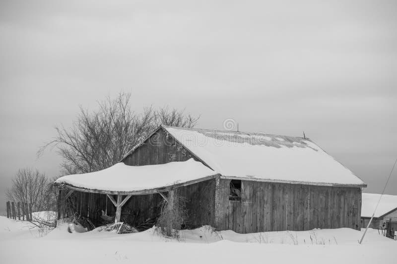 Celeiro resistido velho no bw do inverno fotos de stock royalty free