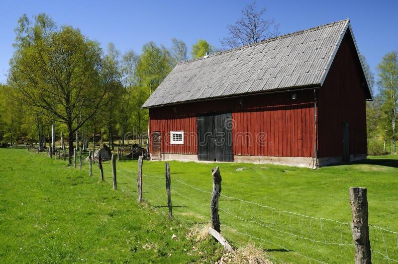 Celeiro Sueco Para O Gado Fotografia de Stock