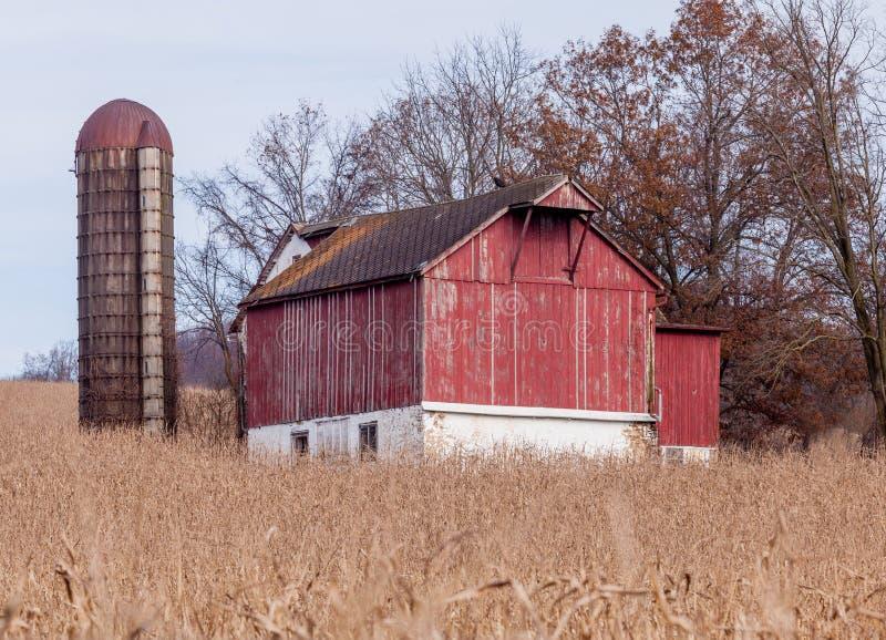 Celeiro velho e silo vermelhos cercados pelo milho foto de stock royalty free