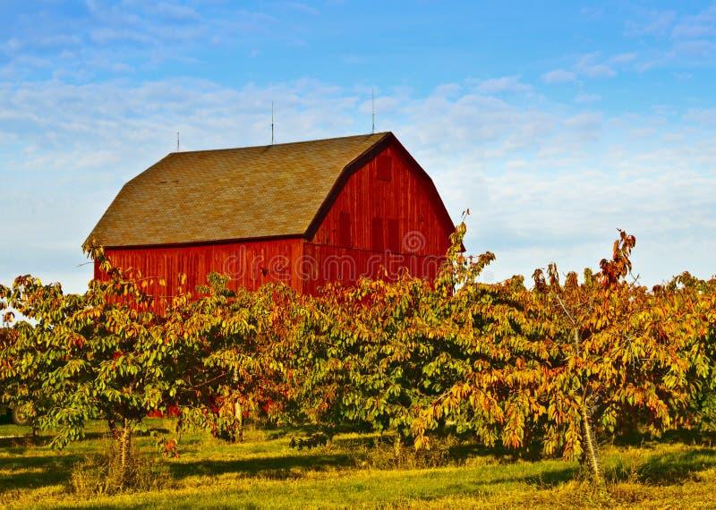 Celeiro vermelho, árvores de Apple imagem de stock