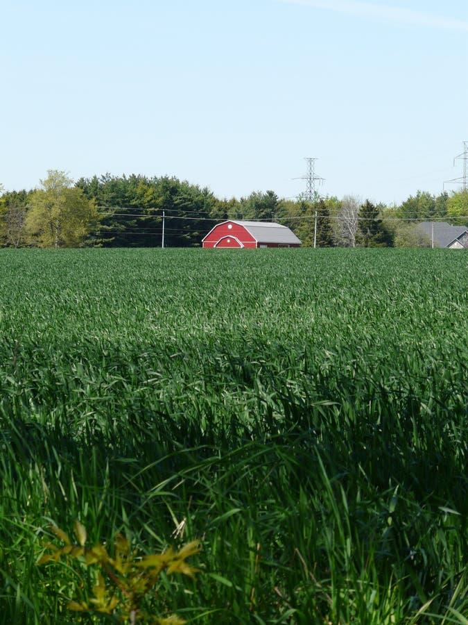 Celeiro vermelho e campo de milho verde, Ontário, Canadá fotografia de stock