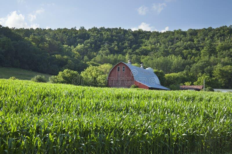 Celeiro vermelho velho perto do campo de milho abaixo dos montes arborizados em um verão ensolarado imagens de stock royalty free
