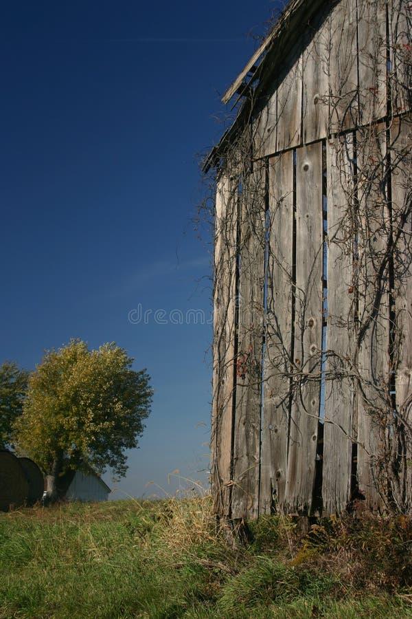 Celeiro, videira, e céu azul - vertical imagens de stock royalty free