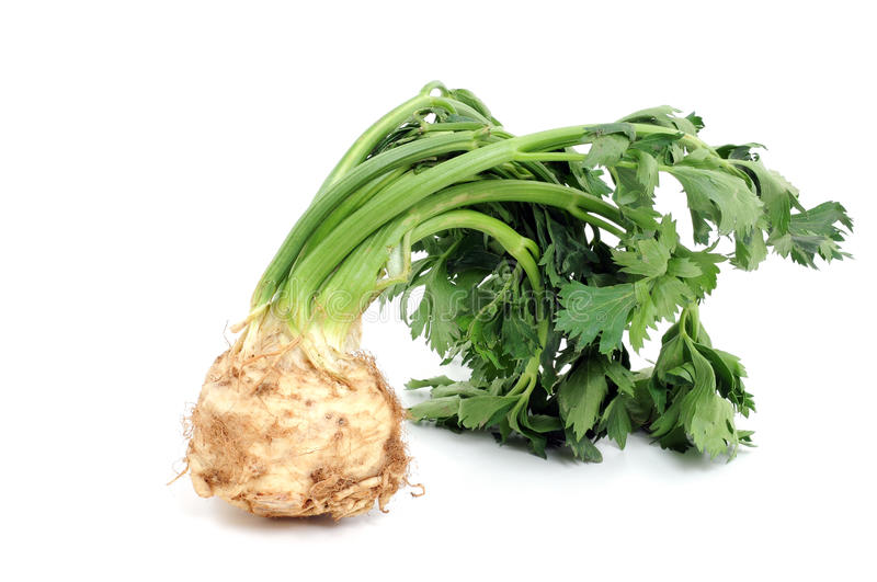 Celeriac. In front of a white background stock photo