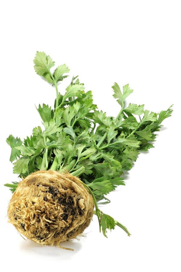 Celeriac. Isolated on white background stock photography