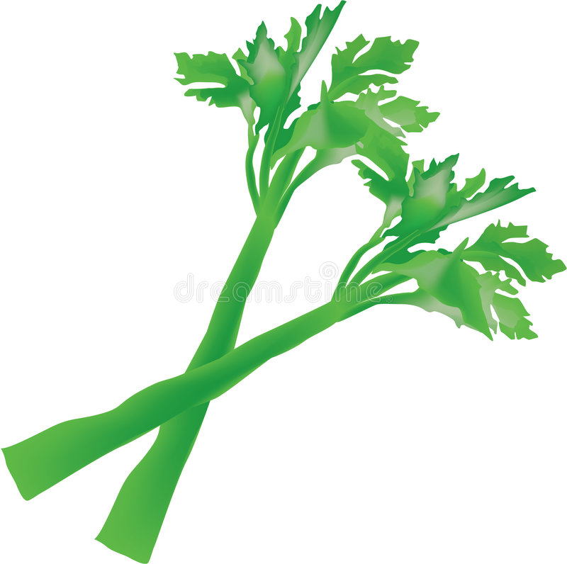 Celery. Illustration of a couple of sticks of celery royalty free illustration