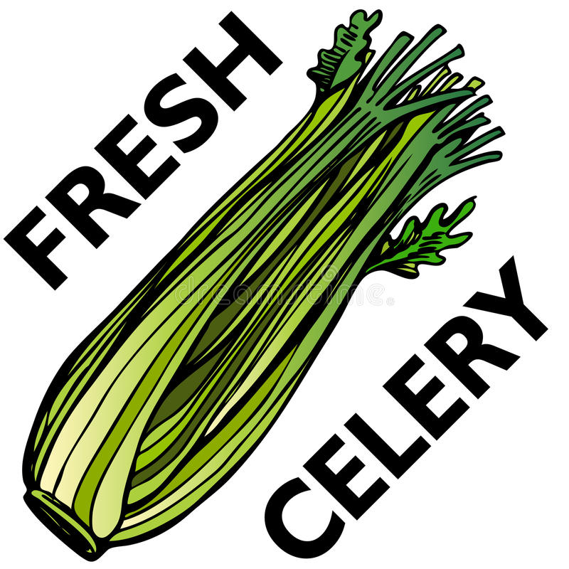 Celery. An image of a stalk of celery royalty free illustration
