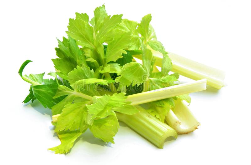 Celery. Leaves isolated on white background stock photos