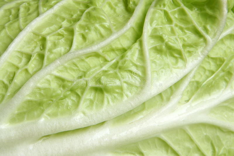 Celery cabbage. Chinese cabbage leaf closeup, for backgrounds or textures stock photos