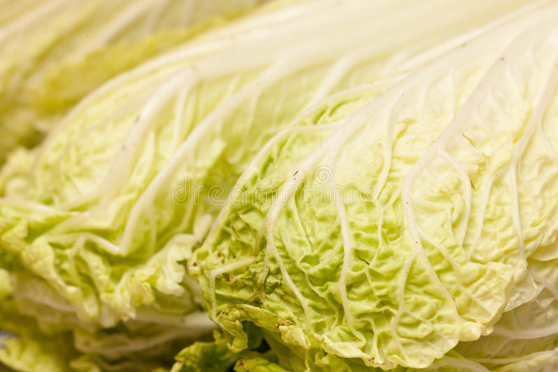 Celery Cabbage stock images