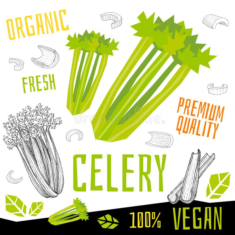 Celery icon label fresh organic vegetable, vegetables nuts herbs spice condiment color graphic design vegan food. stock illustration