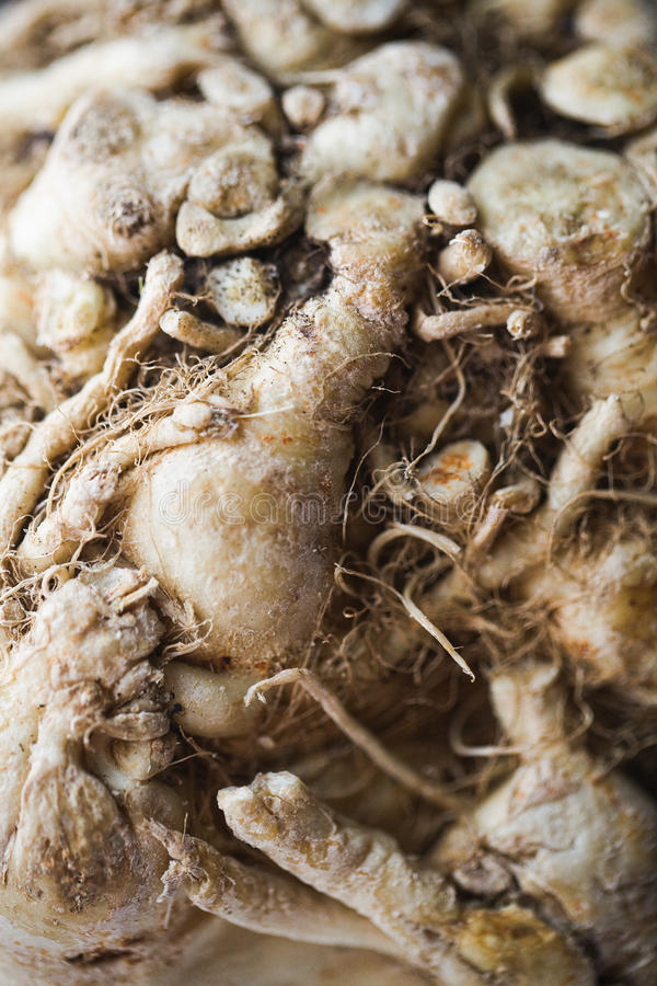 Download Celery Root Stock Photo - Image: 22569980