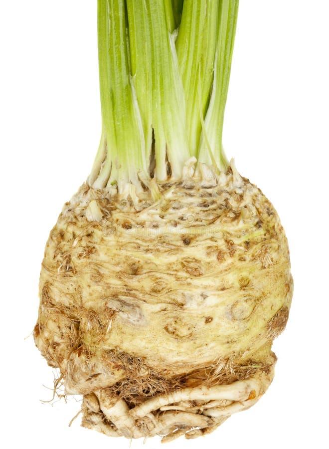Celery root (celeriac). On white stock image