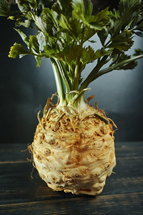 Celery root - celeriac, fresh healthy vegetable. With green shoots stock photography