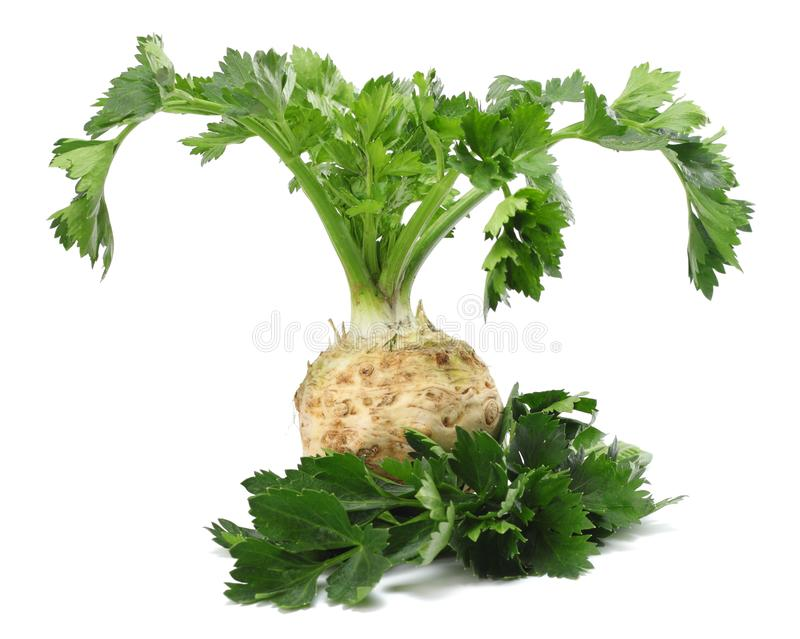 Celery root with leaf isolated on white background. Celery isolated on white. Healthy food stock photography