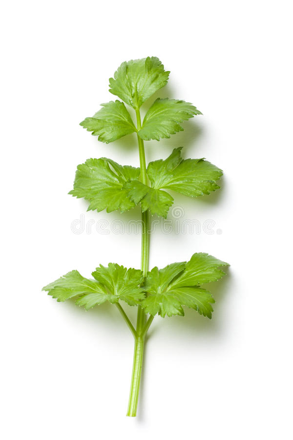 Download Celery Stalk stock photo. Image of isolated, natural - 37870608