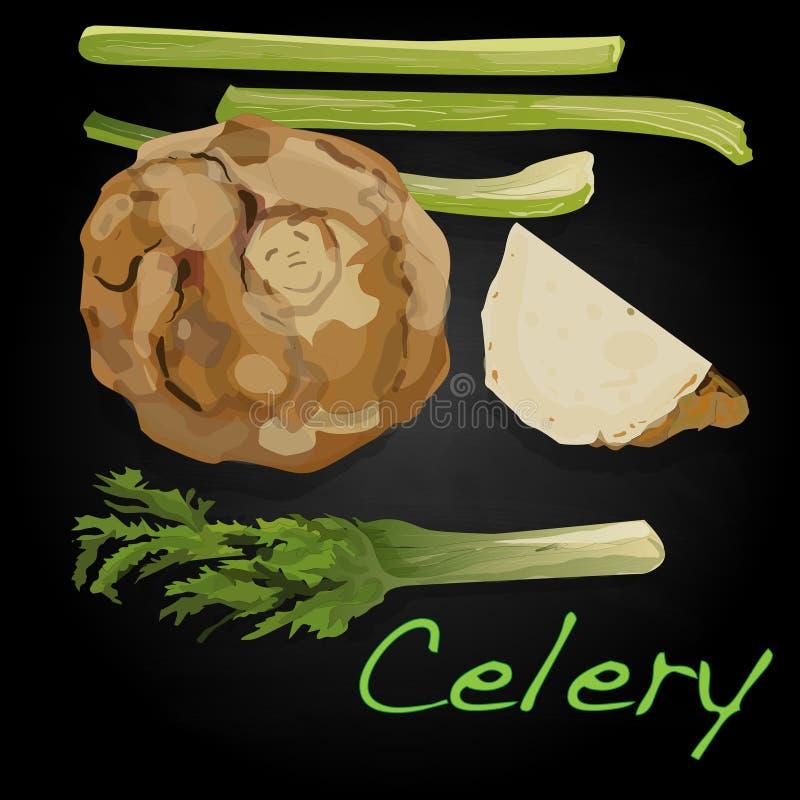 Download Celery Vector Illustration Stock Vector - Image: 83715120
