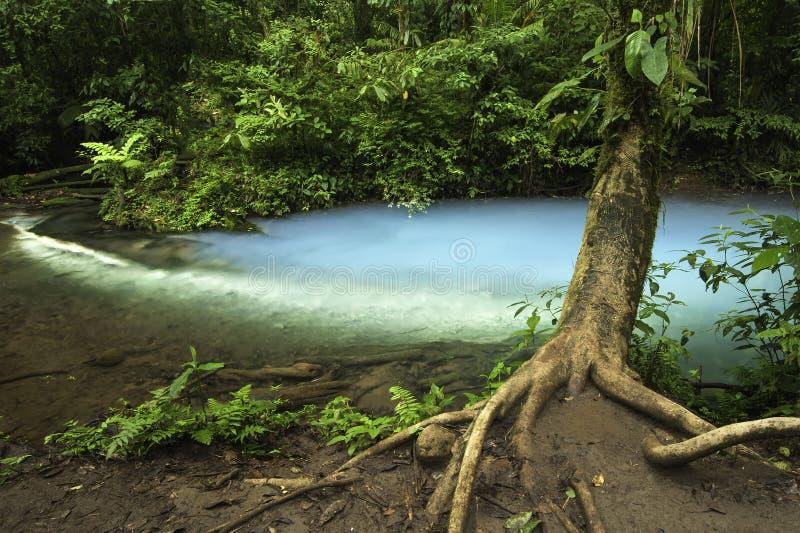 Celeste-Коста Rica Рио стоковое изображение rf