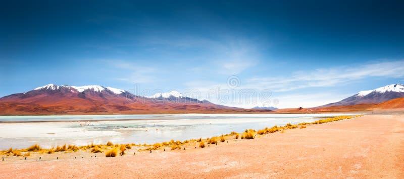 Celeste-lagune op grote hoogte met roze flamingo's op plateau Altiplano, Bolivië stock afbeeldingen