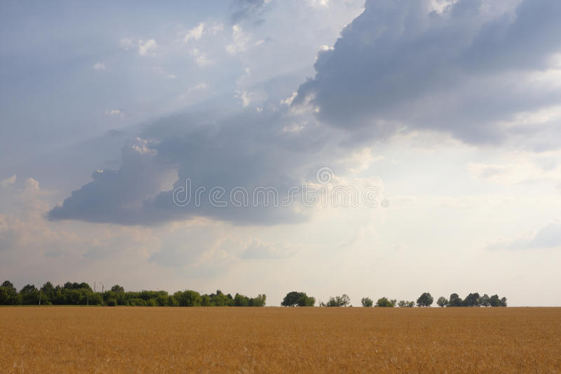 Download Celestial landscape stock photo. Image of cereal, body - 11255464