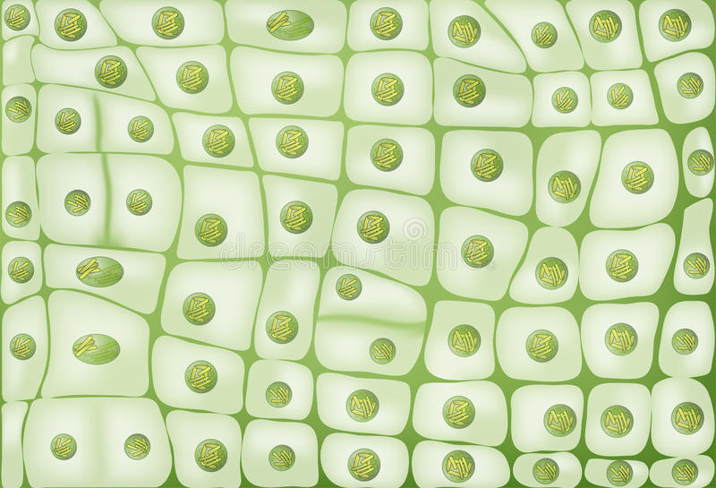 Cell division background. Plant cells stock illustration