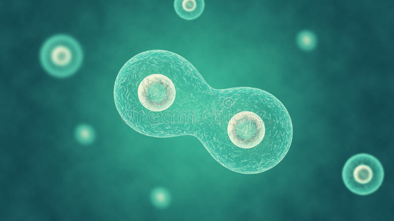 Cell division stock photography