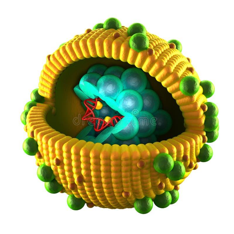 Cell för hepatitvirus - som isoleras på vit royaltyfri illustrationer