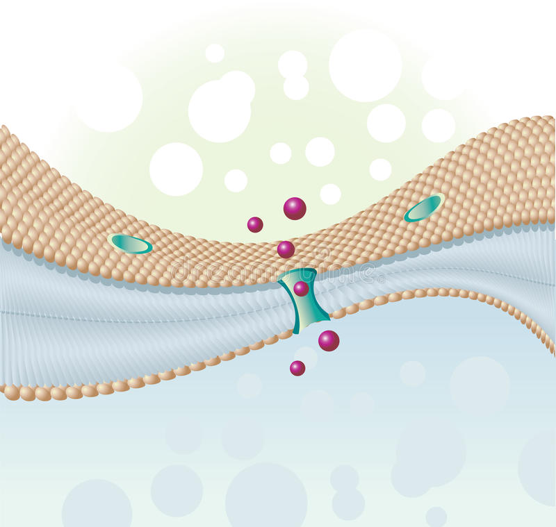 Cell membrane. Ast molecules of human cells and cell membrane vector illustration