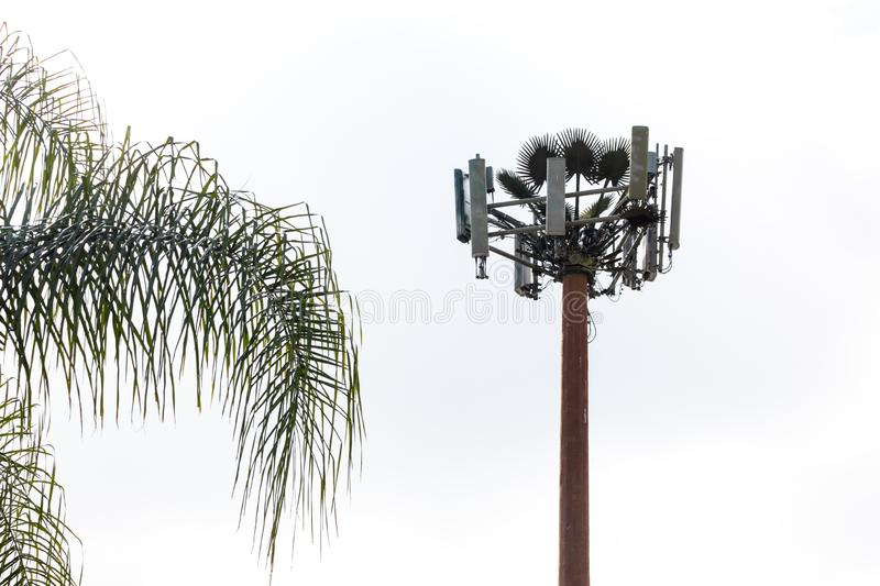 Cell Tower disguised as a tree royalty free stock image