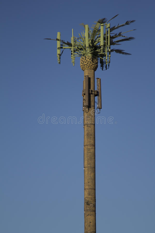 Cell Tower Palm Tree stock images