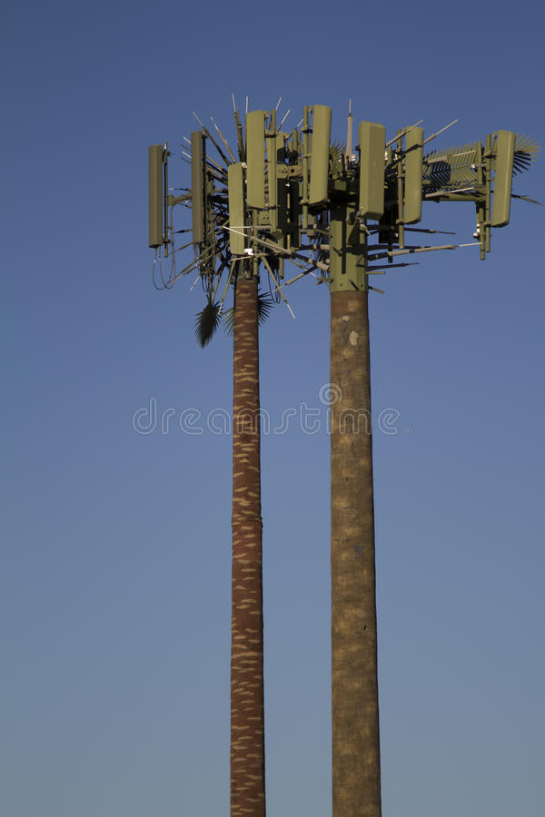 Cell Tower Palm Trees royalty free stock photography