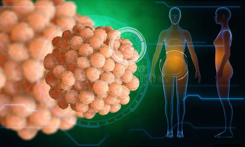 Cella dell'ovulo umano Sperma, spermatozoo, galleggiante all'ovulo wooman incinto, concetto medico di anatomia con gli elementi d immagine stock