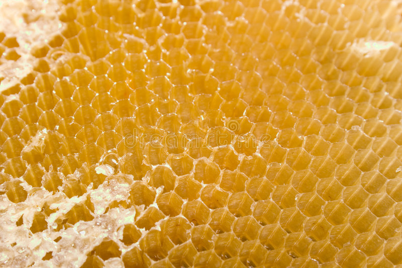 Cellen voor honing royalty-vrije stock fotografie