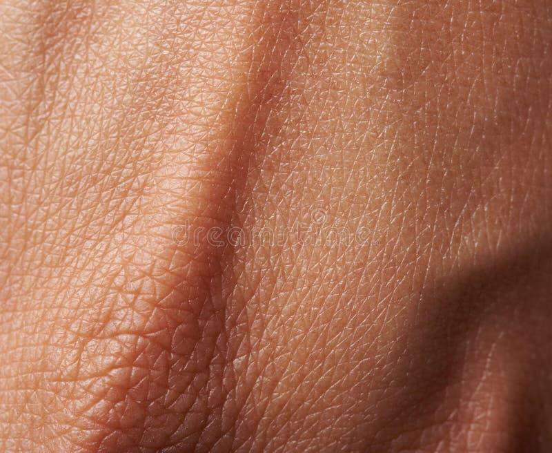 Celler på kvinnahud arkivfoton