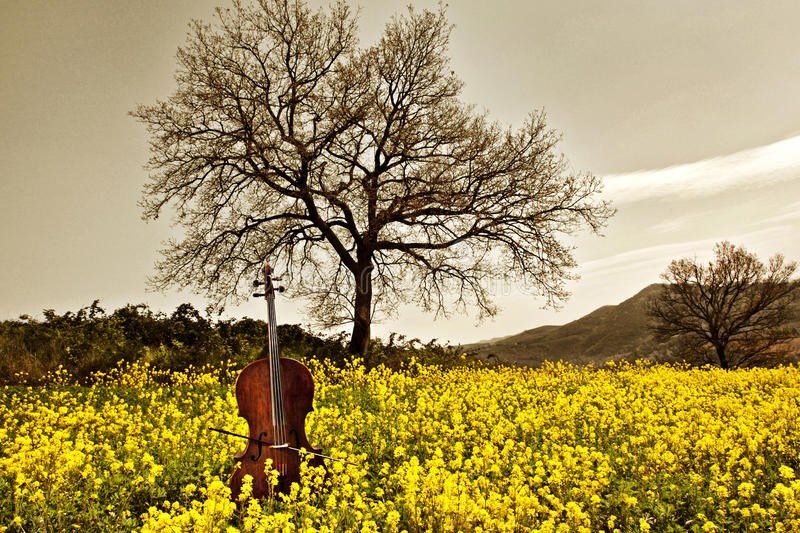 Download Cello in the yellow stock image. Image of foliage, countryside - 16776981