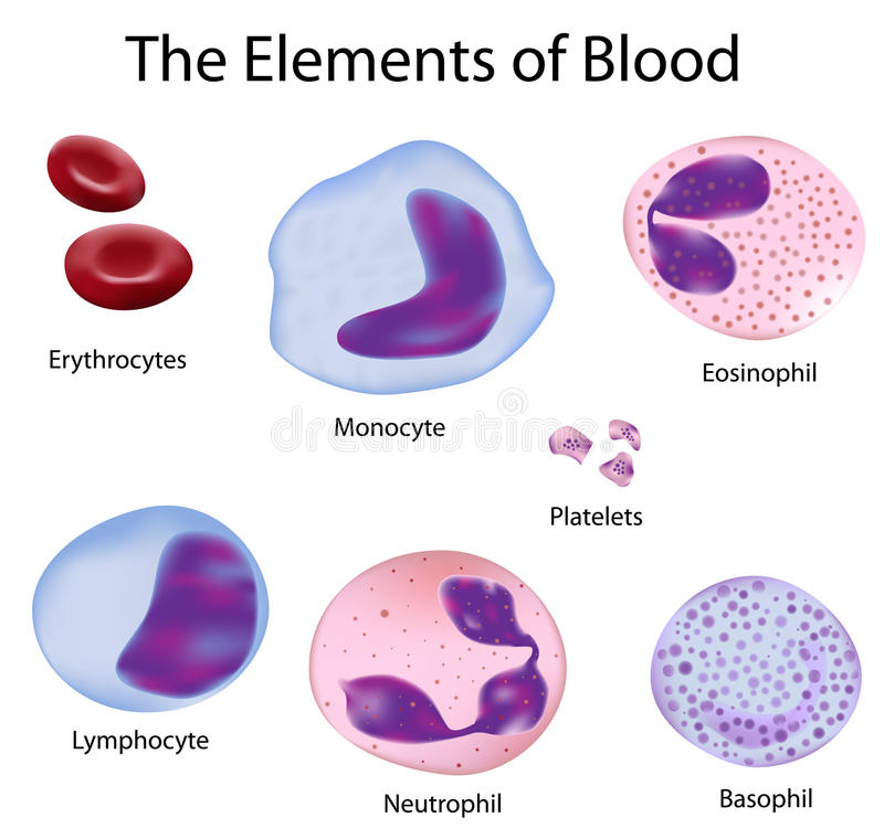 The cells of blood vector illustration