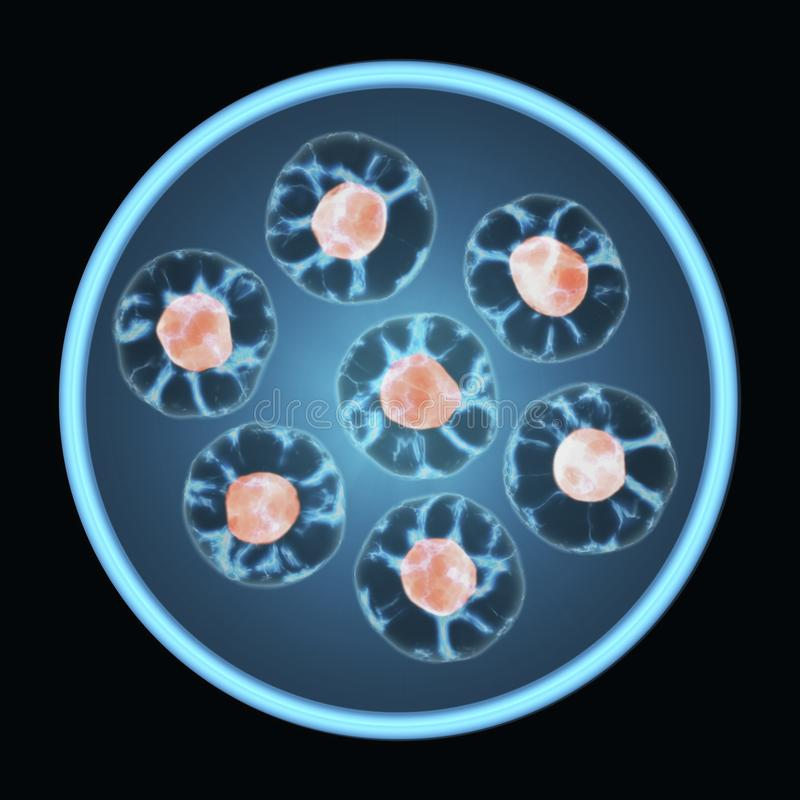 Cells Growing In A Tissue Culture Petri Dish Isolated On Black Background. Mitosis, The Process Of Cell Division And Multiplication. Medicine Scientific royalty free stock photo