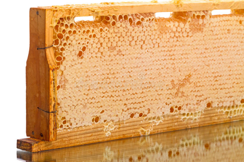 Download Cells Of The Hive With Honey Stock Image - Image: 43636431
