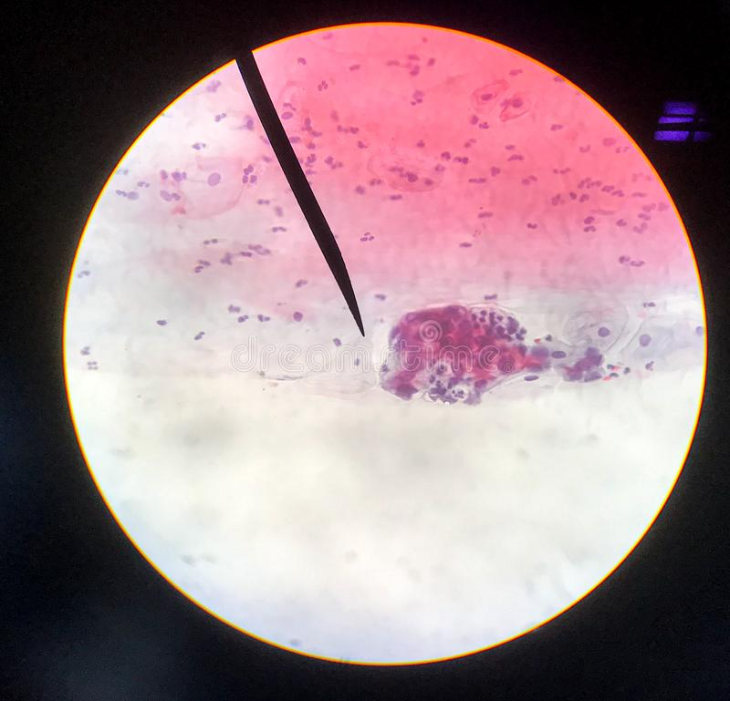 Cells in reproductive female cytology and histology concept royalty free stock image