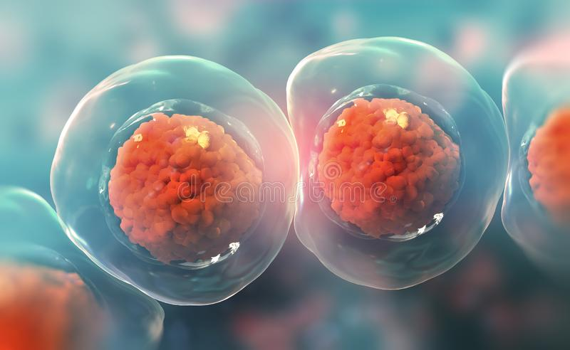 Cells under a microscope. Research of stem cells. Cellular Therapy. Cell division stock illustration