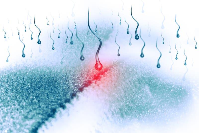 Cellula dell'uovo e dello sperma illustrazione vettoriale