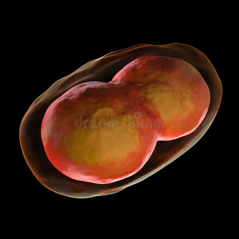Cellula di vaiolo - isolata sul nero fotografie stock