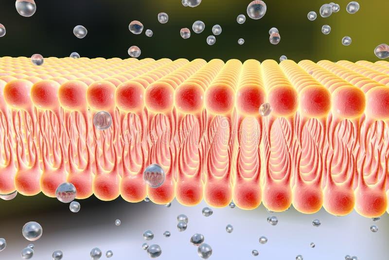 Cellulair membraan met verspreiding van molecules royalty-vrije illustratie