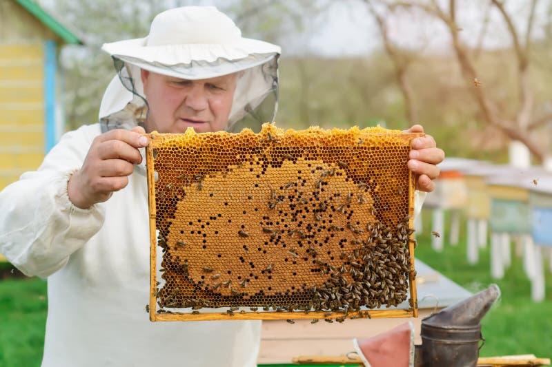 Cellule avec des larves des abeilles et des jeunes abeilles Travaux sur les ruchers au printemps photo stock
