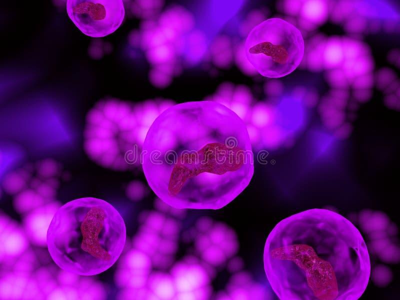 Cellule d'ovule humain illustration de vecteur