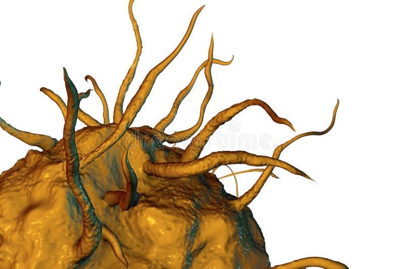 Cellule de macrophage, vue en gros plan illustration de vecteur