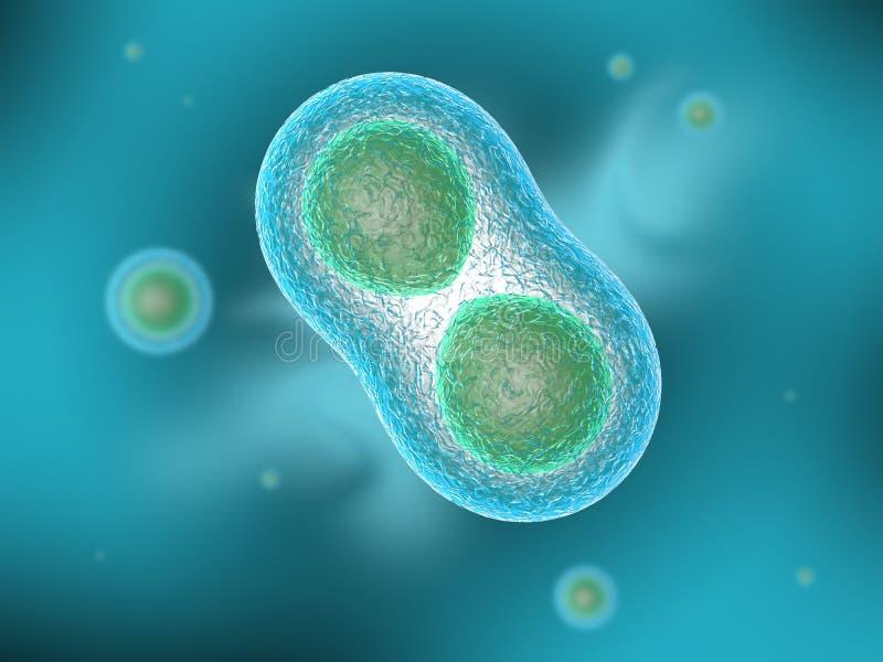 Cellule di Osmosi illustrazione vettoriale