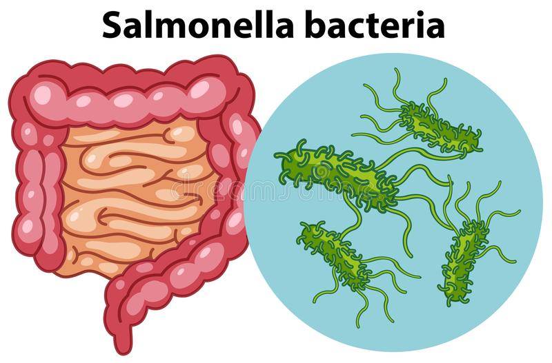 Cellule ingrandette dei batteri della salmonella illustrazione di stock