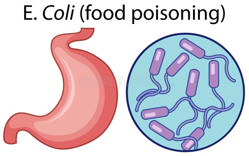 Cellule ingrandette di intossicazione alimentare illustrazione vettoriale