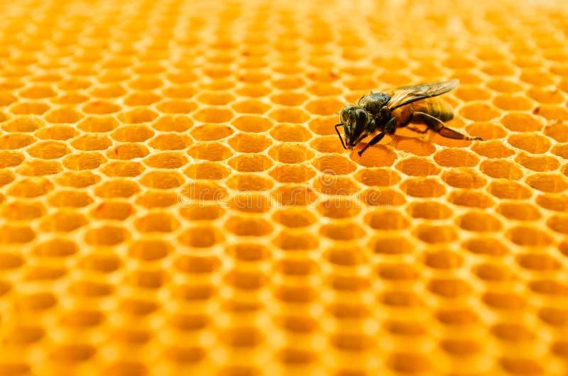 Cellules de miel d'abeilles photographie stock libre de droits